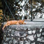 Katze schläft beim Korfu Segeln