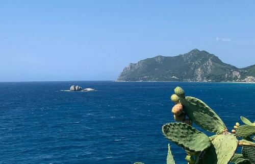 Rund Korfu Felsen Agios Giordios Kaktusfeigen am Kaktus mit Meerblick
